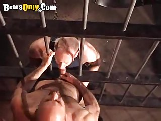 Hairy Stallions In Dungeons And Chains