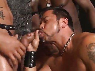 Gay Bears Sucking