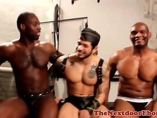 Restrained black hunks cock sucked in trio