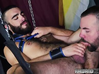 Cockhungry bear plowed raw and rimmed