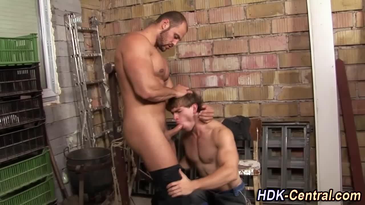 Bear sucks and tugs hard dick